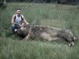 жесть Огромные кабаны-свиньи ТАКОВО Я НЕ ВИДЕЛ